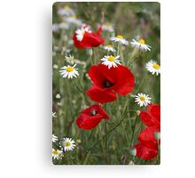 Wild Poppies and Daisies Canvas Print