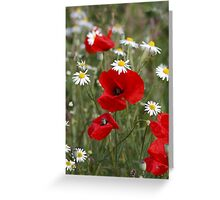 Wild Poppies and Daisies Greeting Card