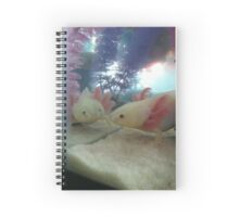 Reflections - Kipp Spiral Notebook