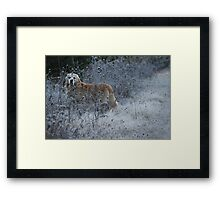 In The Early Morning Frost Framed Print