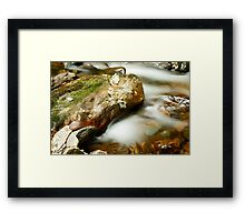 Leaf & Rock at Torc Framed Print