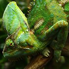 Oh, So Green! Chameleon by Lesley  Hill