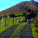 Roadblock - Kenmare, Co.Kerry, Ireland by Pat O Callaghan