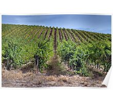 Adelaide Hills Vineyard, South Australia   Poster