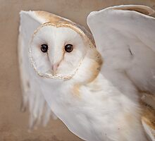 Barn Owl with Textures by JMcCallum