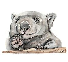 Lucy the Wombat Photographic Print