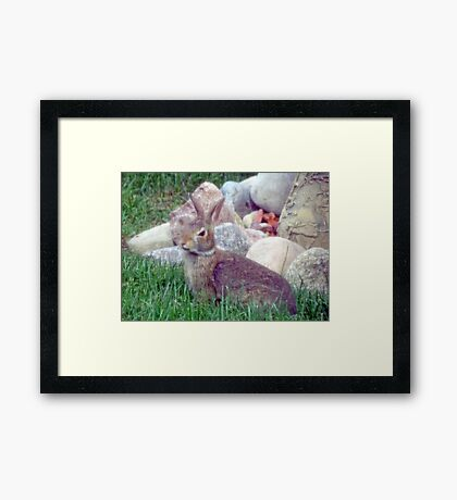 Front Yard Bunny Framed Print
