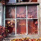 Rustic Autumn Vines Against An Old Building 7 by Jamie Wogan Edwards