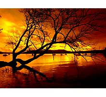 """""""THE TREE ON THE LAKE"""" Photographic Print"""