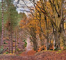 If you go down to the woods today..... by JEZ22