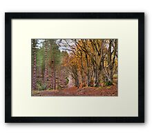 If you go down to the woods today..... Framed Print
