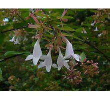 Floral Bells Photographic Print