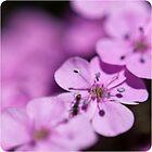 Pretty and Pink by Jodi Turner