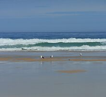 Seagulls on Tolsta Beach - Isle of Lewis by BlueMoonRose