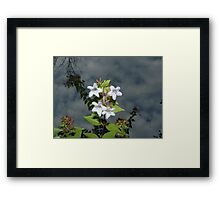 Worm's Have Great Views Framed Print