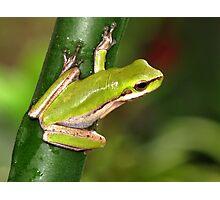 Tiny Frog Photographic Print