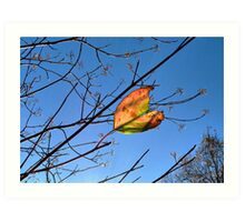 Sparkling Sunlit Branches and a Wind Blown Leaf Art Print