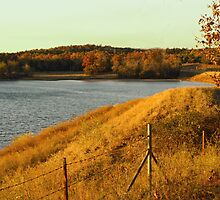Golden Glow on Bellview Road by Susan Blevins