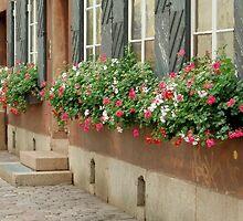 Window Boxes by jerryannjinnett