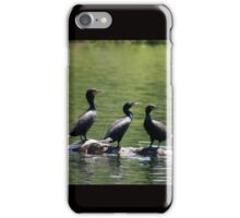 Three Cormorants on Rock iPhone Case/Skin