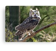 Great Horned Owl ~ Captive (6mos) Canvas Print