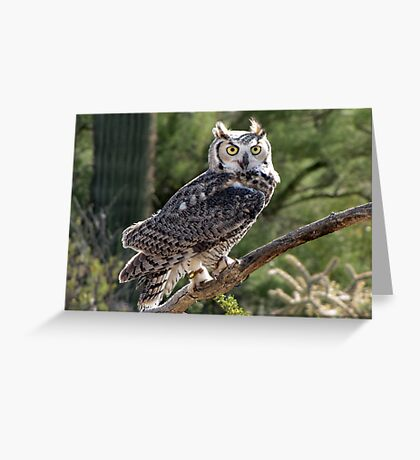 Great Horned Owl ~ Captive (6mos) Greeting Card
