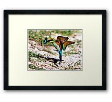 Rainbow Bee Eater  162 Framed Print