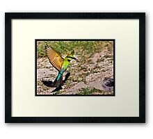 Rainbow Bee Eater 185 Framed Print