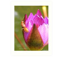 Insect in a waterlily - Singapore Botanic Garden Art Print