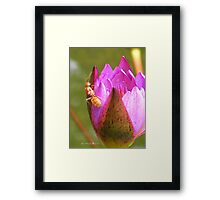 Insect in a waterlily - Singapore Botanic Garden Framed Print