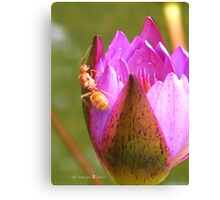 Insect in a waterlily - Singapore Botanic Garden Canvas Print