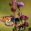 Flutter Bye,,,I Need More Flutter Byes by Adam Kuehl
