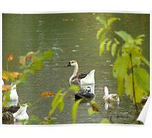Geese, Okay guys he's leaving, N.W. Arkansas Poster