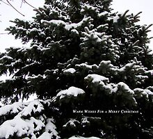 Warm Wishes For A Merry Christmas by Pietrina Elena
