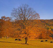 Golden Autumn ll by Sharksladie