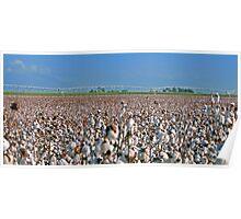 Irrigated Cotton & Sugar cane Poster