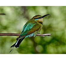 Rainbow Bee-Eater Photographic Print