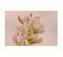 Milkvetch Wild Flower Macro Art Print