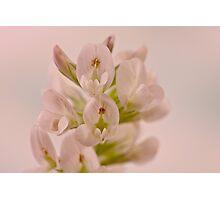 Milkvetch Wild Flower Macro Photographic Print