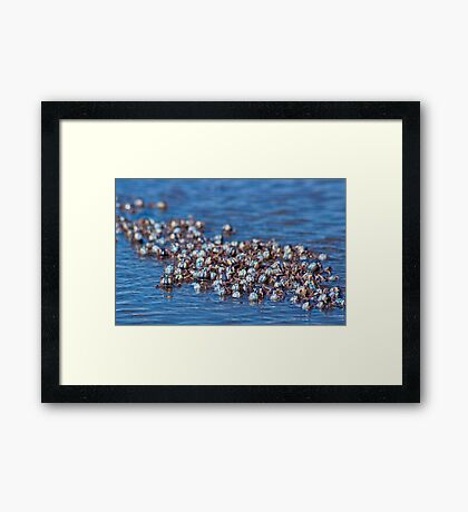 Marching on Framed Print