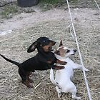 """""""Holy CRAP! Watch out for the electric fence!!!"""" by Diana-Lee Saville"""