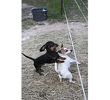 """""""Holy CRAP! Watch out for the electric fence!!!"""" Photographic Print"""