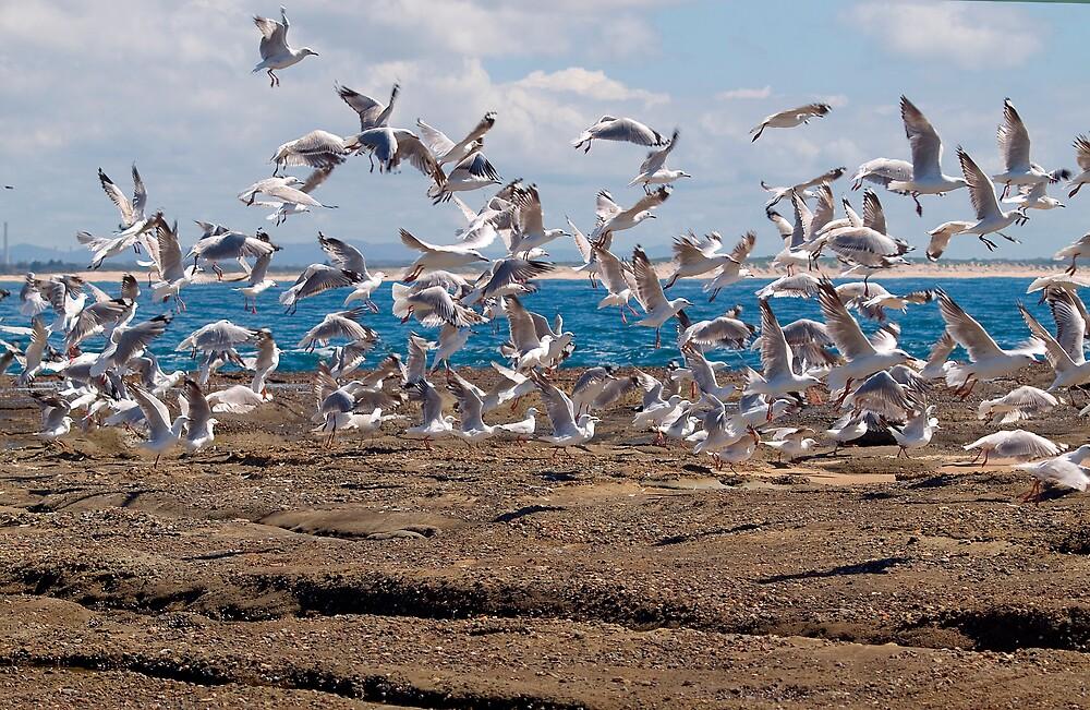 Take off!!! by Anna D'Accione