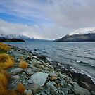 Golden Grasses of Queenstown by David  Hibberd