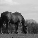 Horse by RockyWalley