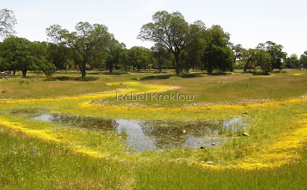 Vernal Pools, Fair Oaks, Sacramento County, CA by Rebel Kreklow