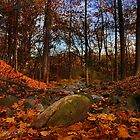 Woodland Stream  by janetlee