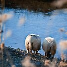 A sheep story by C. & L. | ABBILDUNG.ro Photography