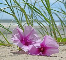 Flowers on a beach by chunkymonkey