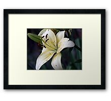 Just because she loves lilies  Framed Print